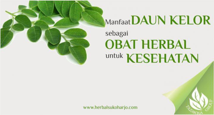 foto gambar informasi artikel seputar manfaat tanaman daun kelor untuk mengobati berbagai penyakit dan memelihara kesehatan tubuh secara alami
