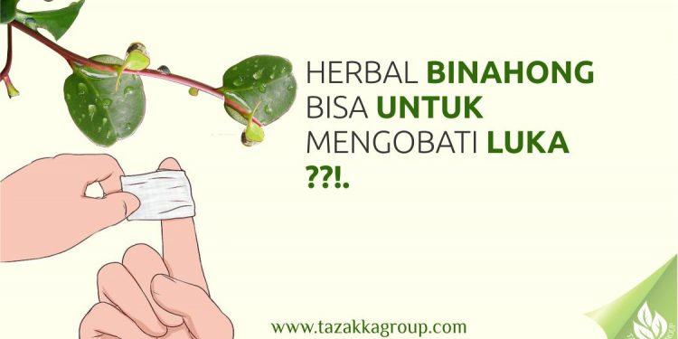 foto gambar Artikel kesehatan herbal Tazakka tentang kandungan manfaat tanaman herbal daun binahong untuk dijadikan sebagai obat alami untuk mengobati luka-min