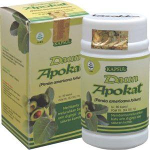 manfaat daun alpukat untuk pengobatan penyakit gagal ginjal secara alami
