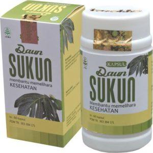JUAL manfaat daun sukun obat herbal jantung dan ginjal ekstrak kapsul tazakka ORIGINAL