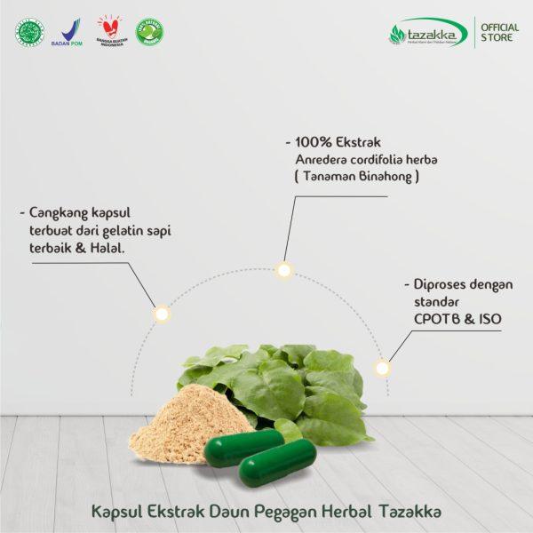 Kapsul Binahong Blister Herbal Tazakka