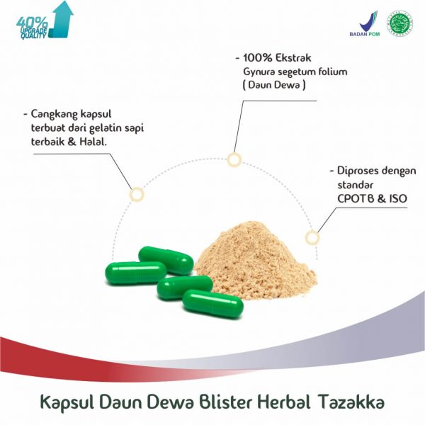 Kapsul Daun Dewa Blister Herbal Tazakka