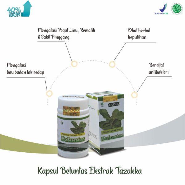 Manfaat Daun Beluntas Ekstrak Tazakka Obat Keputihan Herbal Dan Bau Badan 60 Kapsul