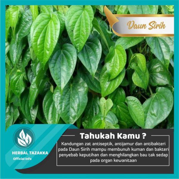 Manfaat daun sirih untuk kesehatan kulit dan daerah kewanitaan