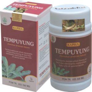 Obat Batu Ginjal Obat Kencing Batu Herbal Tempuyung Tazakka Ekstrak 60 Kapsul ORIGINAL.
