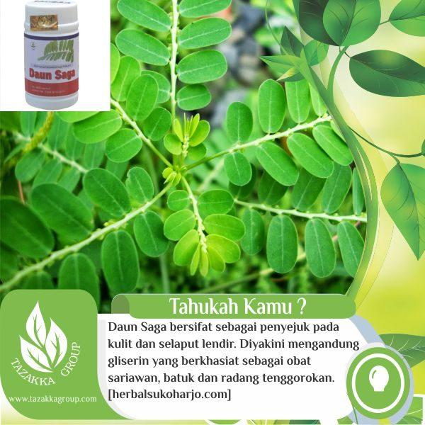 contoh foto gambar katalog manfaat tanaman daun saga untuk kesehatan - herbal tazakka