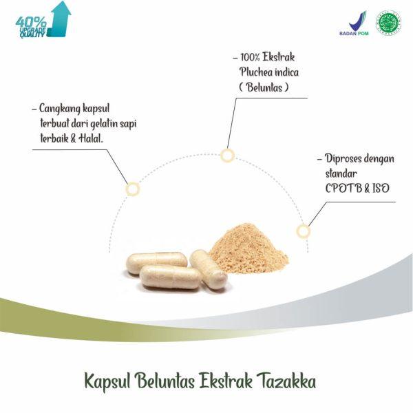 Tazakka Daun Beluntas Ekstrak Obat Keputihan Herbal Dan Bau Badan 60 Kapsul 2