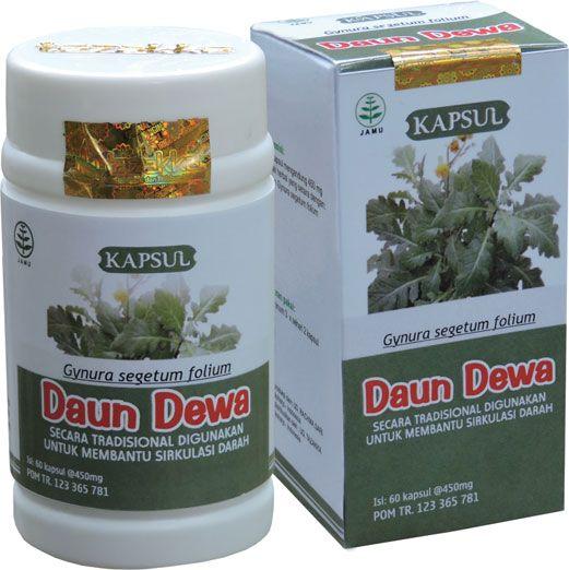 foto gambar produk tazakka herbal sukoharjo daun dewa obat alami untuk melancarkan sirkulasi darah