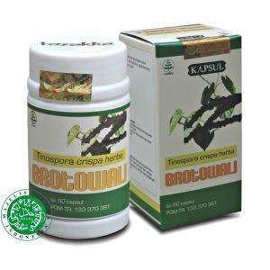 herbal diabetes kapsul ekstrak manfaat tanaman brotowali dari Tazakka