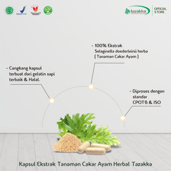 Kapsul Ekstrak Tanaman Herbal CAKAR AYAM Tazakka