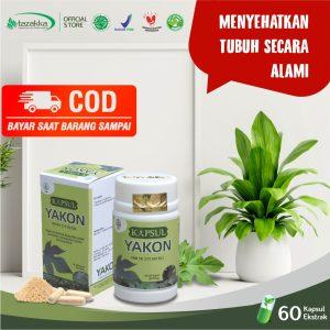 Yakon daun insulin herbal tazakka COD