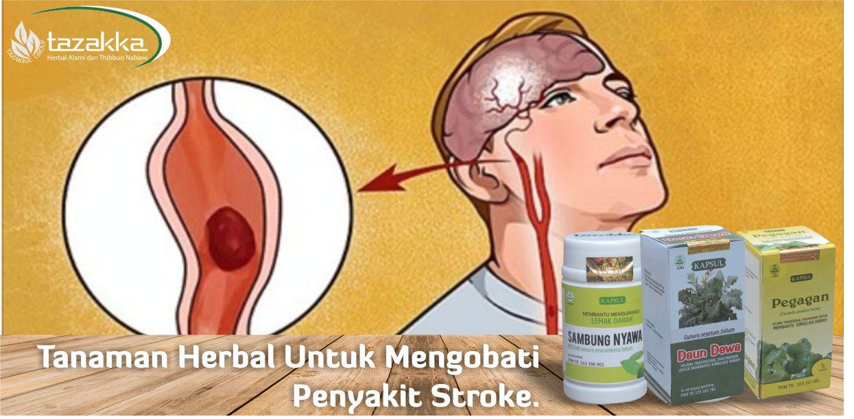 contoh foto gambar banner artikel blog website tazakka herbal sukoharjo jawa tengah jenis tanaman obat herbal alami yang bermanfaat untuk membantu mencegah dan mengobati kolesterol, peredaran darah, masalah darah kental penyebab stroke